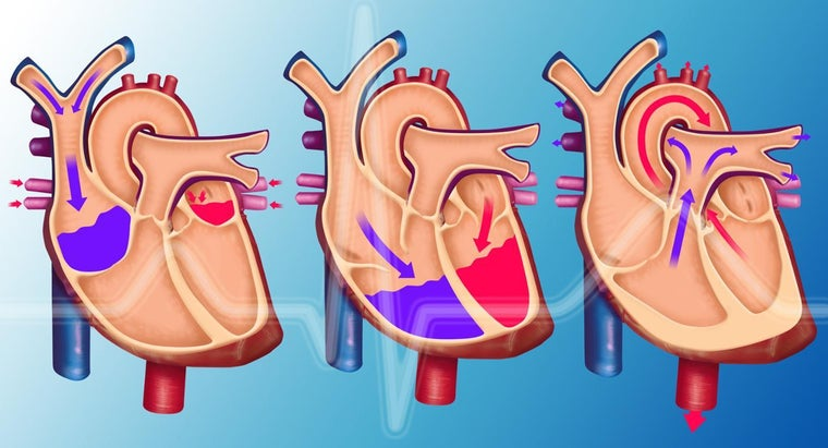 What Does the Pulmonary Vein Do?