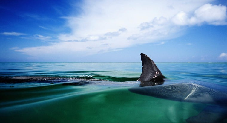 What Eats Dolphins?