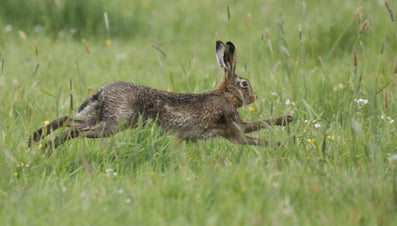 What Are a Rabbit's Natural Predators?
