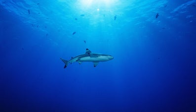 What Is a Baby Shark Called?