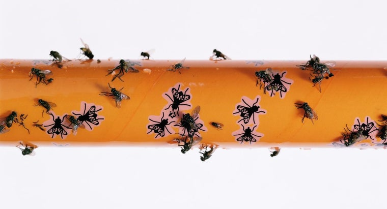 What Is a Home Remedy for Catching House Flies?