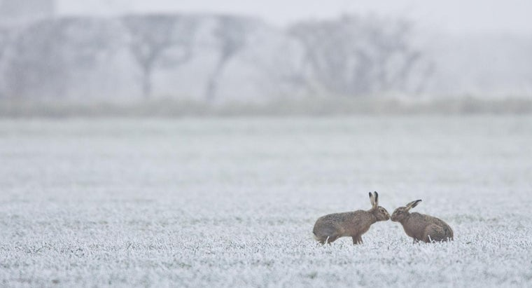 What Is a March Hare?