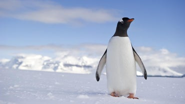 What Is a Penguin's Habitat?