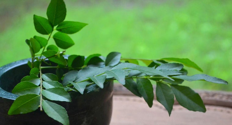 What Is a Substitute for Curry Leaves?