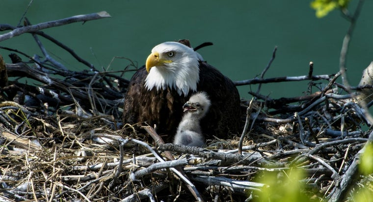 Baby Eagle Emerges In Nest Above D C Police Academy The Washington Post