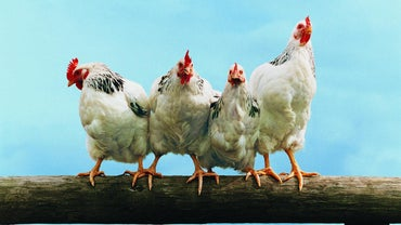 What Is Poultry?