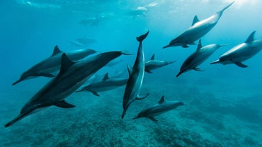 What Is the Dolphin's Habitat?