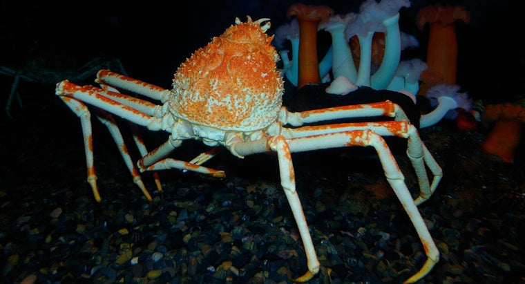 What Is the Largest Type of Crab in the World?