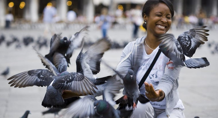 What Is the Average Life Span of a Pigeon?
