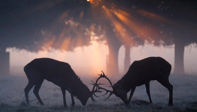 What Is the Name of a Male Deer?