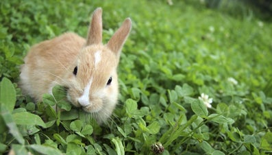 What Kind of Food Do Rabbits Eat?
