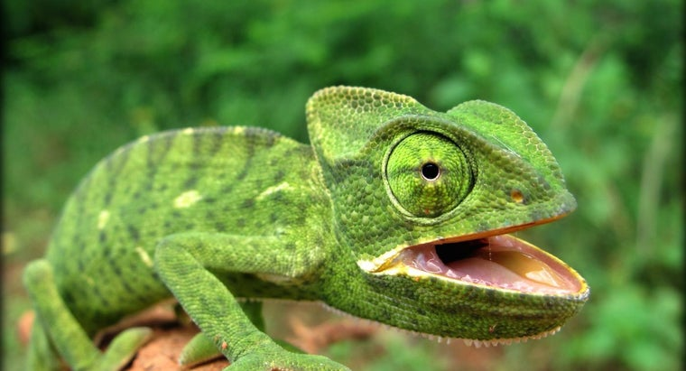What Are the Characteristics of a Reptile?