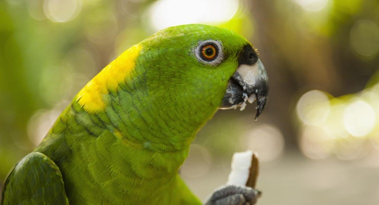What Types of Foods Do Parrots Eat?