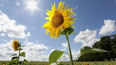 What Percent of the Sun's Energy Do Plants Use?
