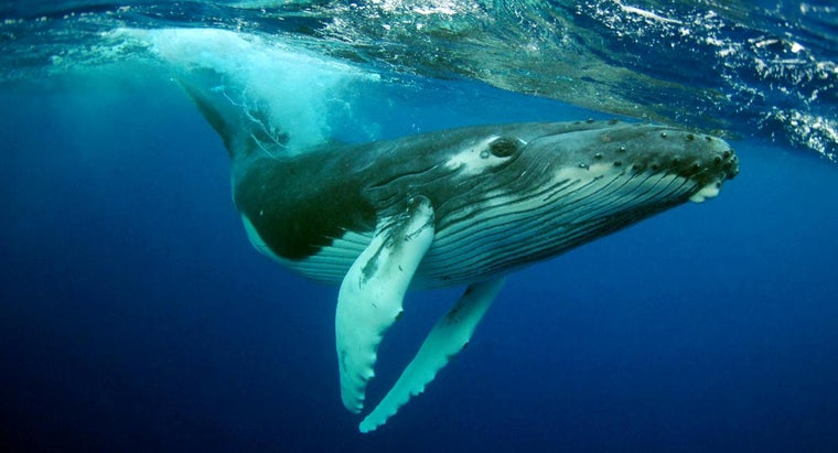 What Year Did Whaling Start?