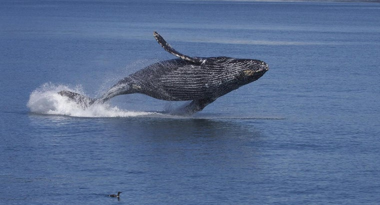 When Is the Best Time of the Year to See Whales in Alaska?