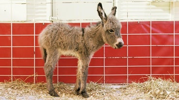 Where Do Donkeys Live?