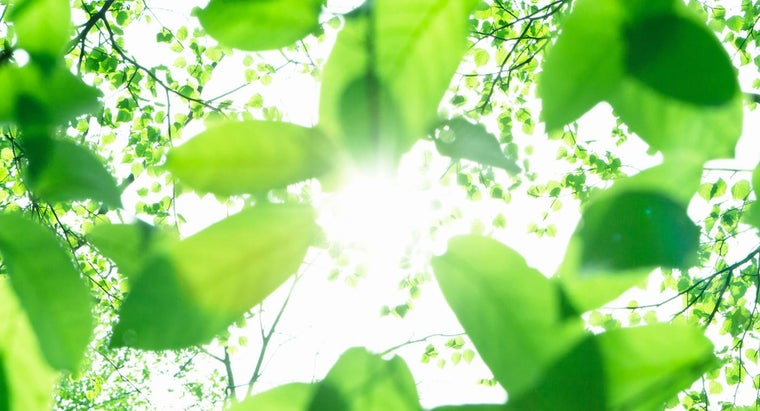 Where Does Photosynthesis Occur?