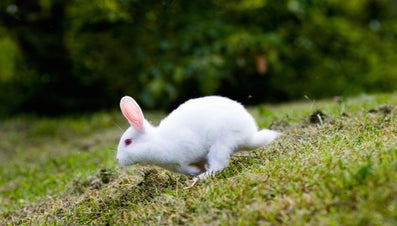 Which Garden Plants Are Poisonous to Rabbits?