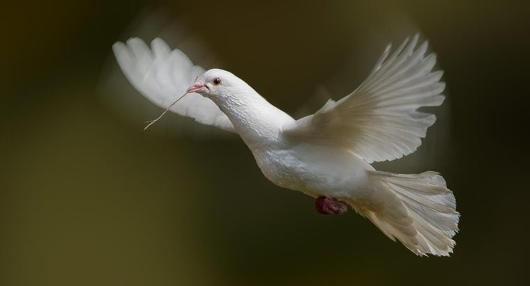 What Do White Doves Symbolize Reference