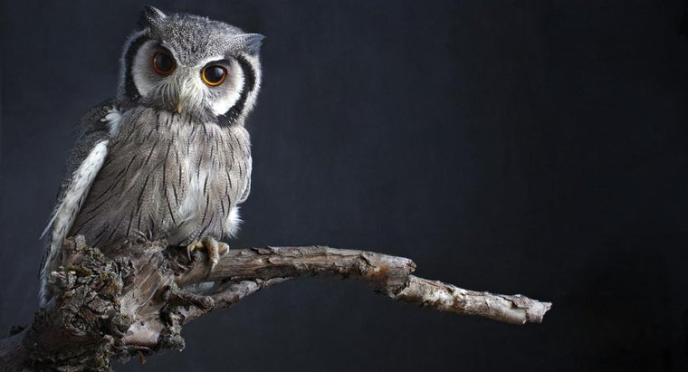 Why Is an Owl a Bad Omen?