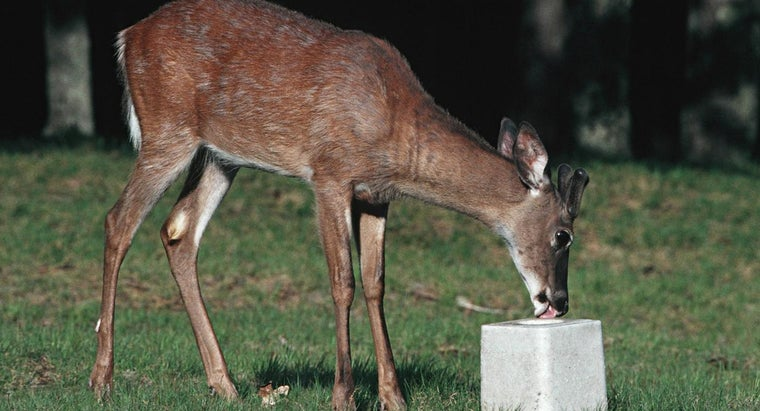 Why Do Deer Lick Salt?