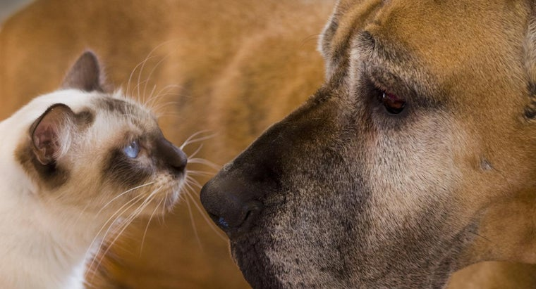 Why Do Dogs Hate Cats?