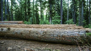 What Are the Environmental Impacts of Deforestation?