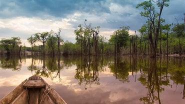 Why Should We Save the Amazon Rainforest?