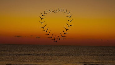 What Does a Winged Heart Symbolize?