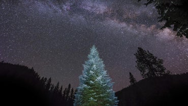 What Is the World's Largest Living Christmas Tree?