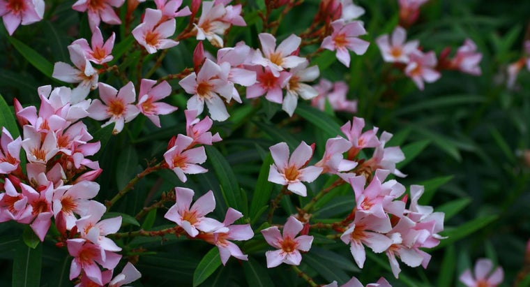 What Is the World's Most Poisonous Flower?