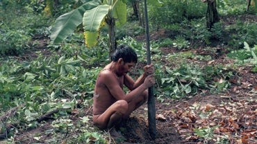 What Do the Yanomami People Eat?