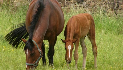 What Is a Young Horse Called?