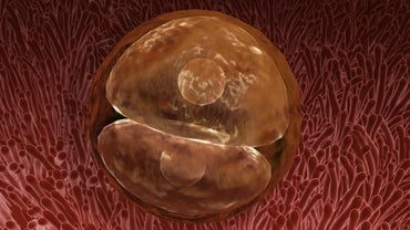 How Does a Zygote Form?