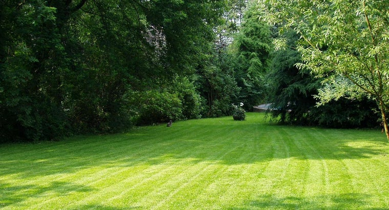 When Is the Best Time to Aerate Your Lawn?