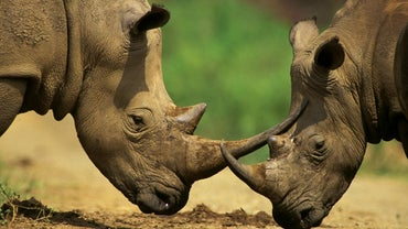 Why Do Animals Become Endangered?