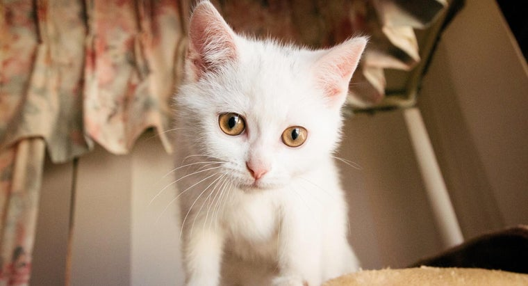 What Are Some Ways to Find Cute Kittens for Free?