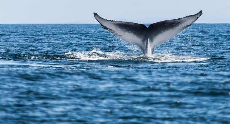 What Are Some Facts About Blue Whales?