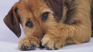 What Causes a Dog to Have Diarrhea With Blood and Mucous?