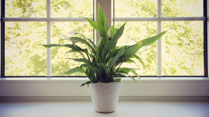 What Are the Best Plants for Indoors With Low Light?
