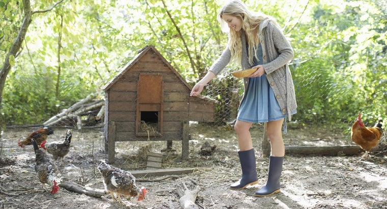 How Can You Build a Small Chicken Coop?