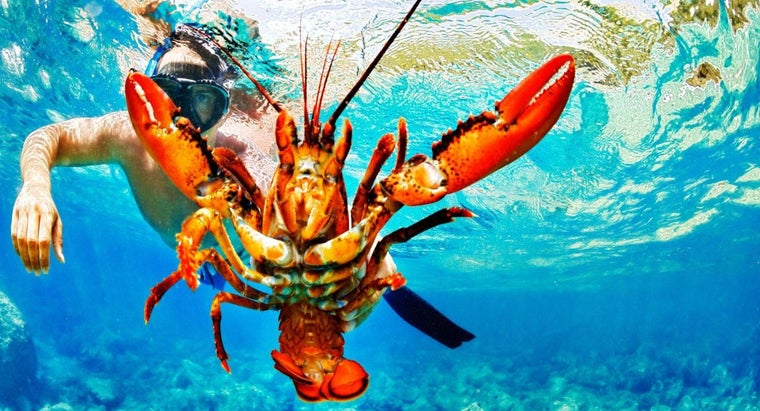 What Are Some Facts About Lobsters?