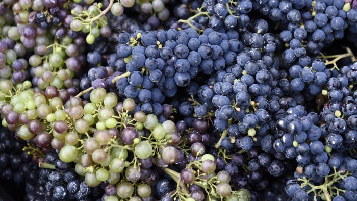 What Ingredients Do You Need for Paula Deen's Grape Salad Recipe?
