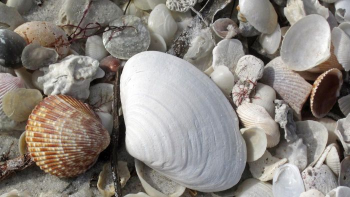 What Are Examples Of Mollusks Reference
