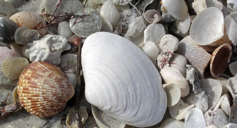 What Are Examples of Mollusks?
