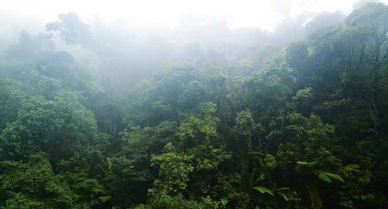 What Are Some Features of Tropical Rain Forests?