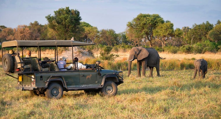 What Is a Sample Itinerary for a South African Safari?