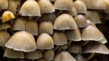 What Is Fungus?