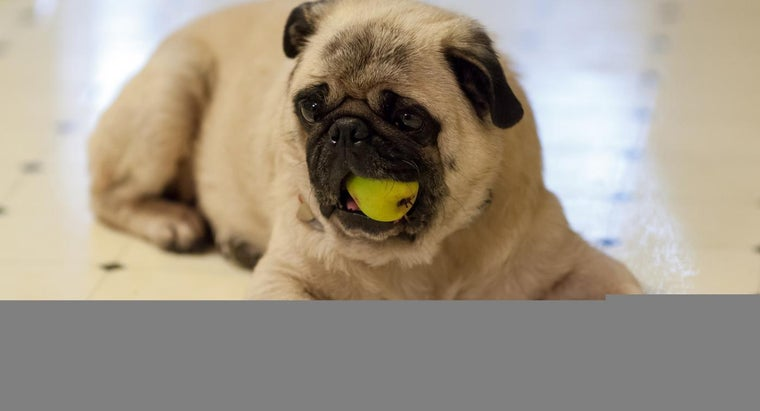 What Is the Appropriate Diet for Dogs With Kidney Disease?